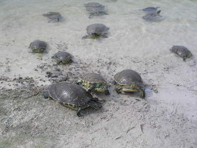 [The turtles are out to get me!]