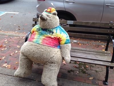 [Just sitting there. Like nothing out of the ordinary. But just how often do you see a life sized teddy bear wearing a propeller beanie?]
