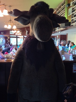 [Note that I am aiming slightly up to get this picture of a stuffed moose. And also note that I couldn't fit the entire thing in the picture.]
